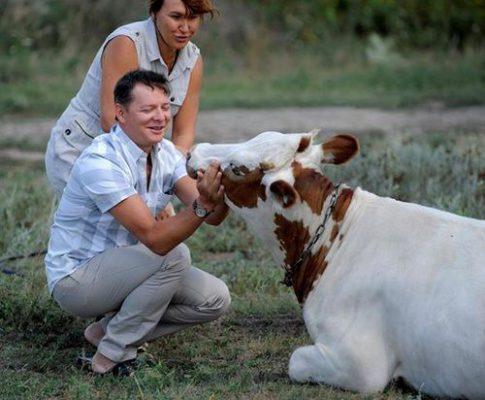 Корова Ляшко і Ляшка.