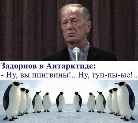 Задорнов і пінгвіни