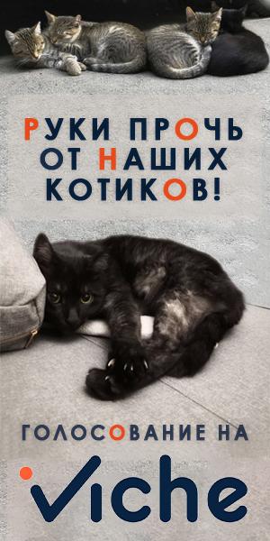 Руки геть від наших котиків